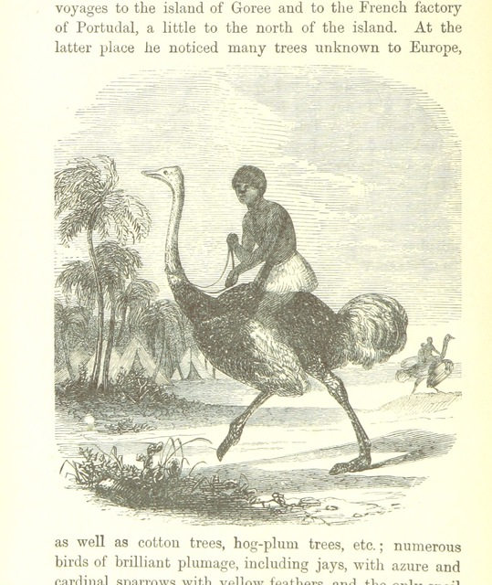 """funny from """"[Heroes of North African Discovery. [With plates.]]"""""""