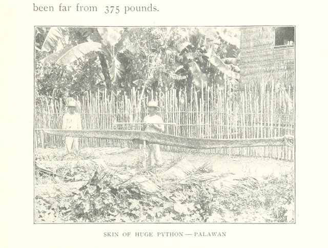 "python from ""The Philippine Islands and their people: a record of personal observation and experience, with a short summary of the more important facts in the history of the archipelago. [With illustrations.]"""