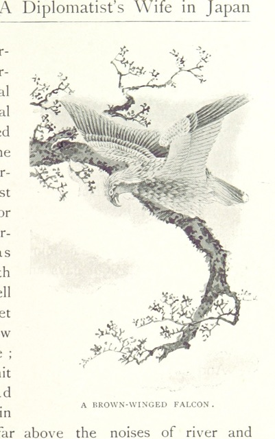 """falcon from """"A Diplomatist's Wife in Japan: letters from home to home ... With two hundred and fifty illustrations"""""""