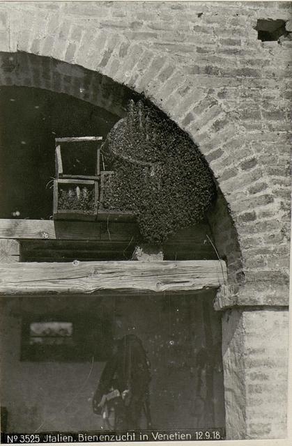 Italienische Bienenzucht in Venetien