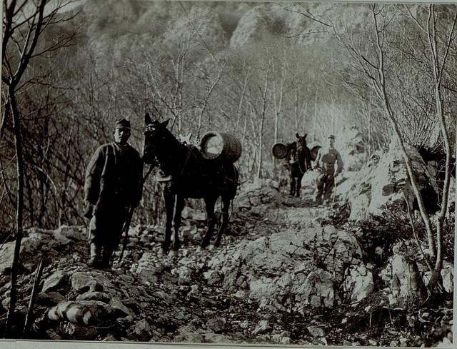 Wasser wird mittels Tragtieren auf den Monte Sabotino befördert
