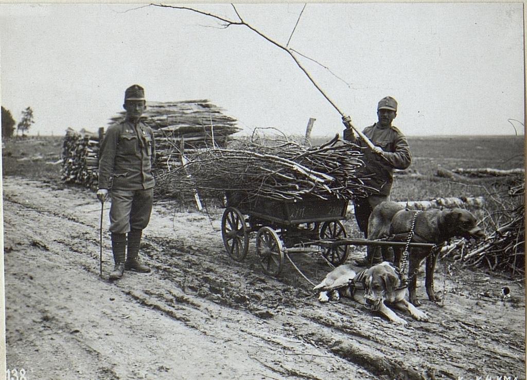 Zughunde bei der Arbeit in Krupy