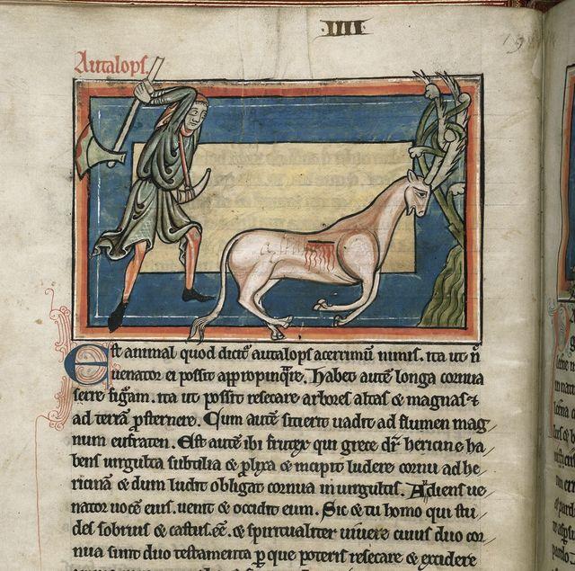 Antelope from BL Harley 4751, f. 5v