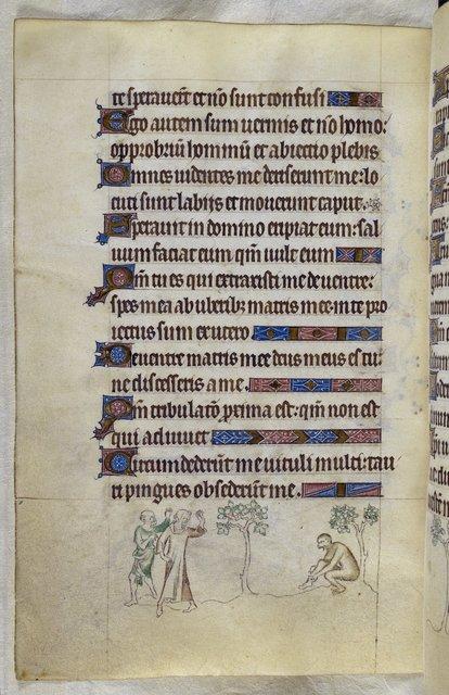 Ape from BL Royal 2 B VII, f. 106v