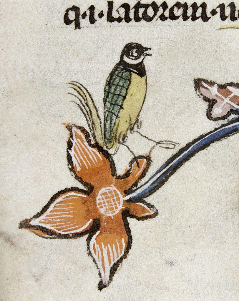 Bird from BL Royal 10 E IV, f. 50