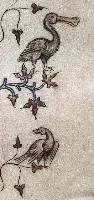 Birds from BL Royal 16 G VII, f. 219
