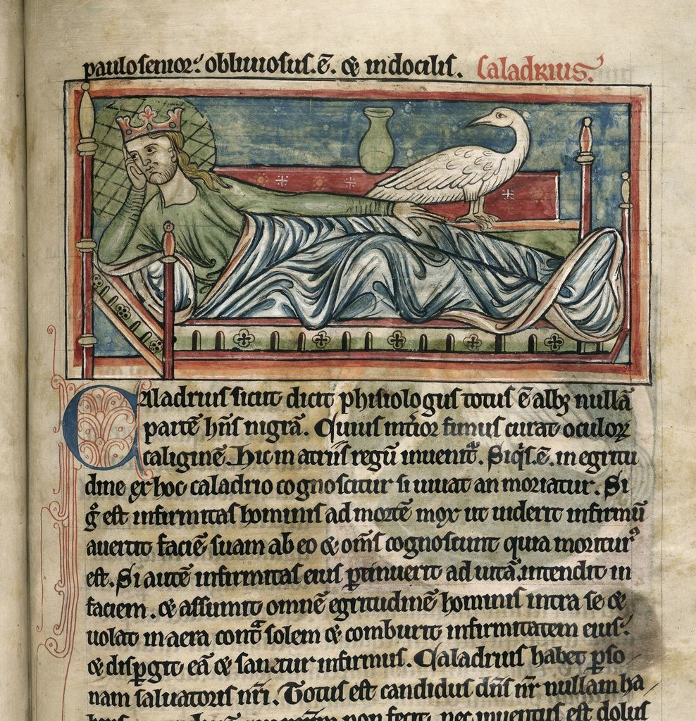 Caladrius from BL Harley 4751, f. 40