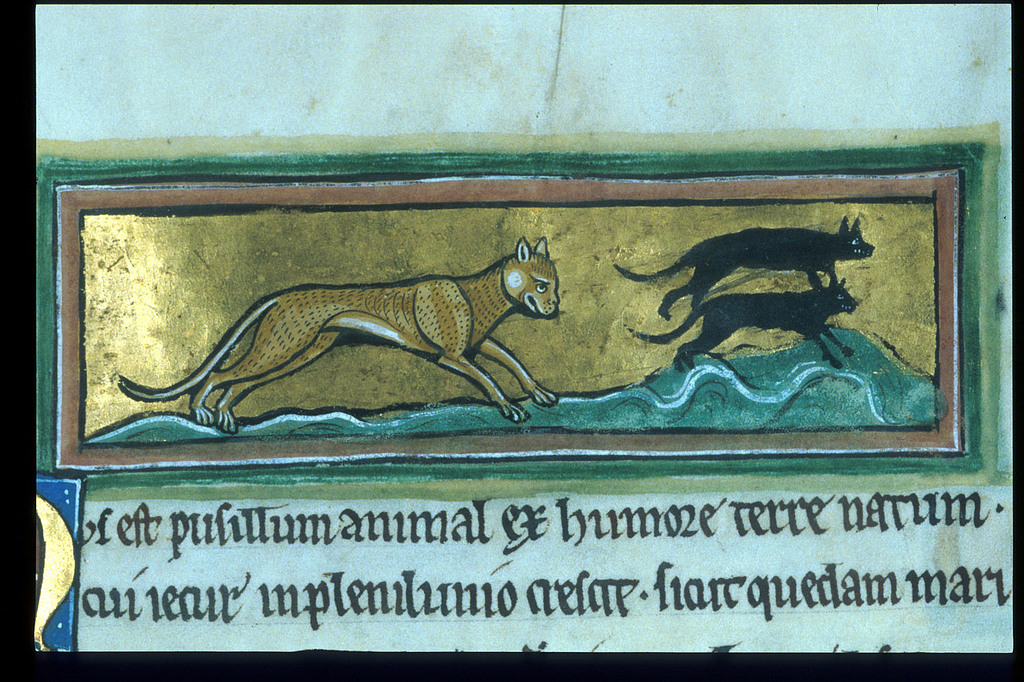 Cat from BL Royal 12 F XIII, f. 43