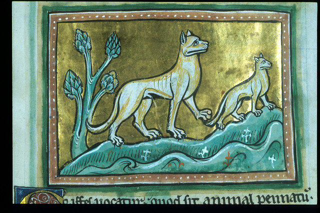 Cheetah and its young from BL Royal 12 F XIII, f. 11