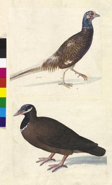 Cod. Min. 42, fol. 41r: Sammlung von Naturstudien u. a. von niederländischen, deutschen und italienischen Künstlern