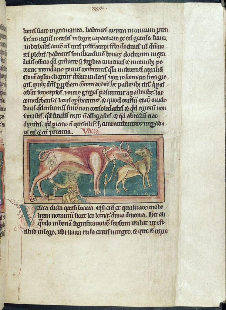 Cow from BL Harley 4751, f. 23