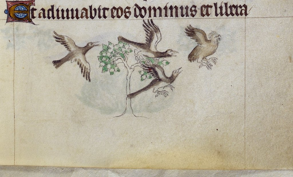 Crows from BL Royal 2 B VII, f. 129