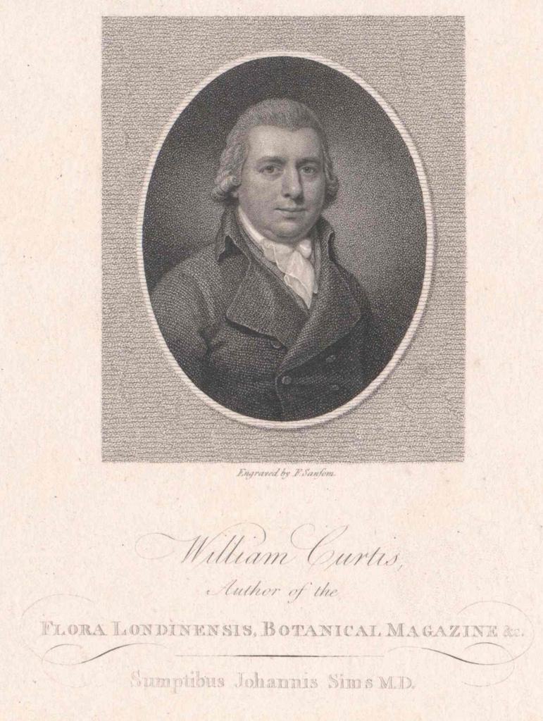 Curtis, William
