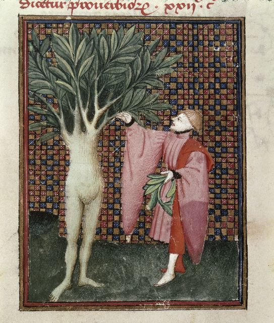 Daphne from BL Harley 4431, f. 134v