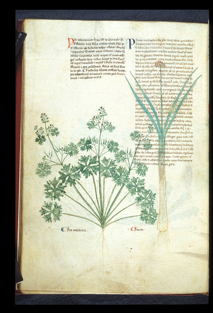 Dove's-foot Cranesbill and Leek from BL Eg 747, f. 82v