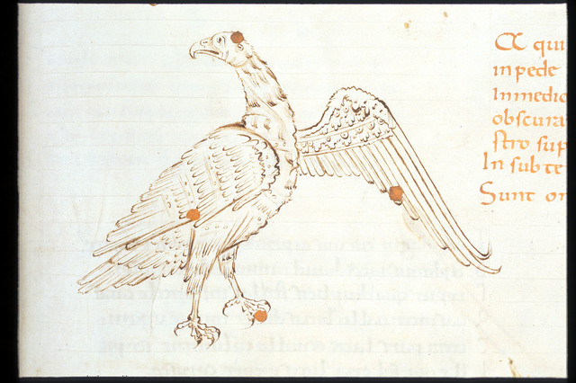 Eagle from BL Harley 2506, f. 40
