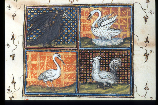 Eagle, swan, crane and cock from BL Royal 17 E III, f. 154