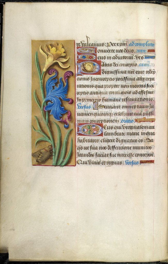 Flowers from BL Royal 2 D XL, f. 37v