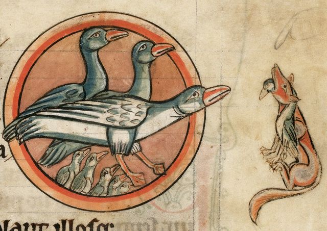 Geese from BL Harley 4751, f. 54