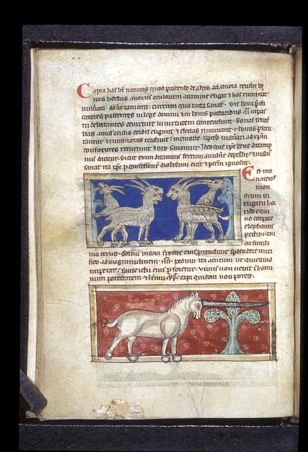 Goats; monoceros from BL Sloane 3544, f. 9v