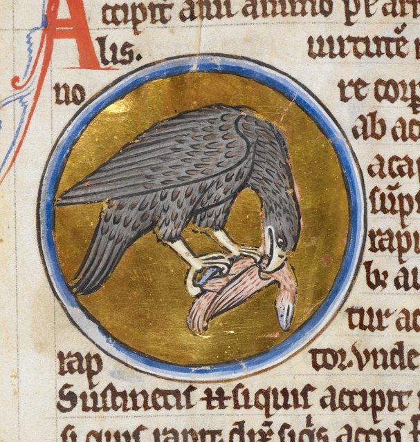 Hawk from BL Royal 12 C XIX, f. 42v