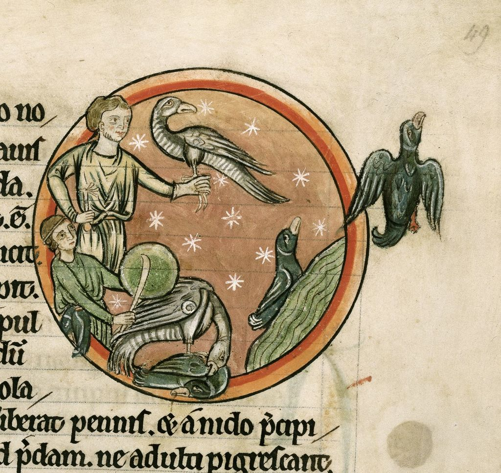 Hawking from BL Harley 4751, f. 49