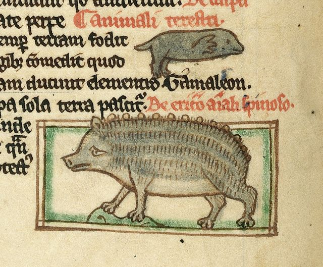 Hedgehog from BL Harley 3244, f. 49v