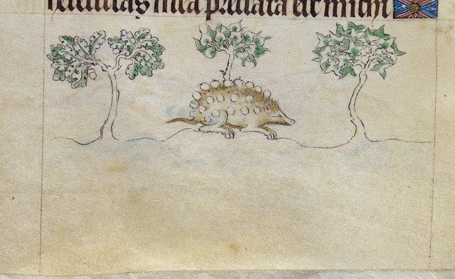 Hedgehog from BL Royal 2 B VII, f. 97v