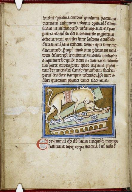 Hyena from BL Royal 12 C XIX, f. 11v