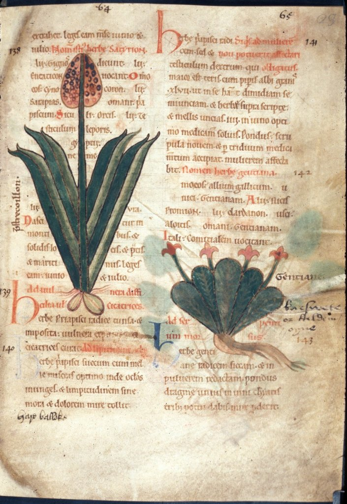 Image from BL Harley 1585, f. 23