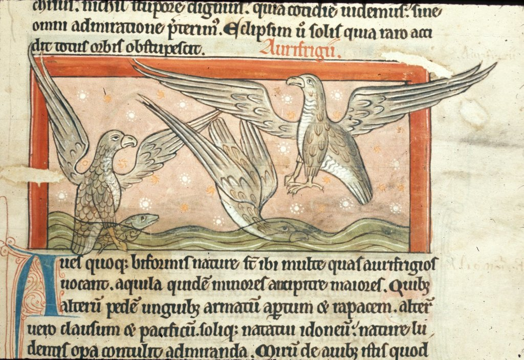 Image from BL Harley 4751, f. 37