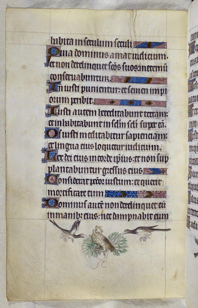 Owl from BL Royal 2 B VII, f. 128v
