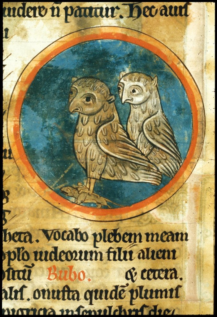 Owls from BL Harley 4751, f. 46v