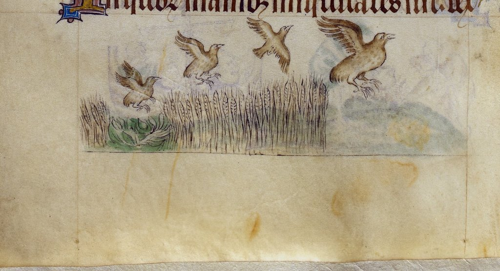Partridges from BL Royal 2 B VII, f. 111v