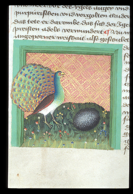 Peacock and hedgehog from BL Eg 1121, f. 74