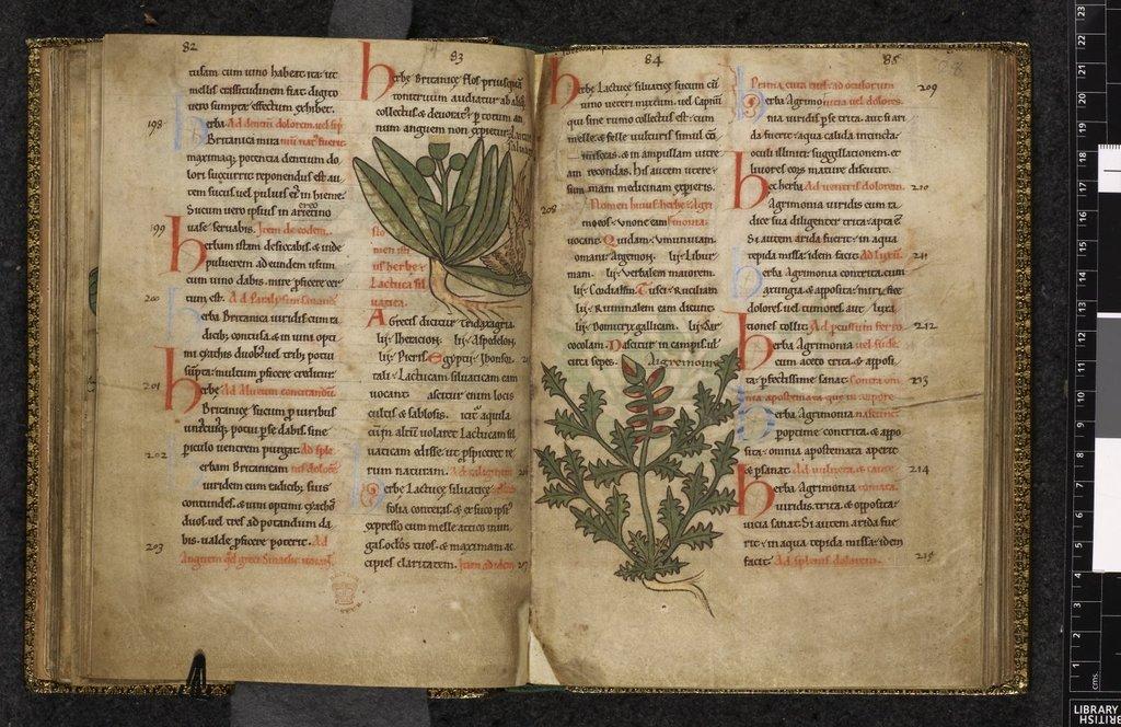 Plants. from BL Harley 1585, ff. 27v-28