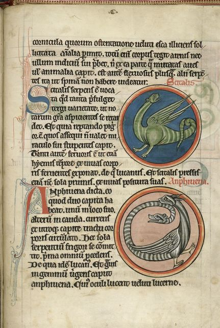 Reptiles from BL Harley 4751, f. 62
