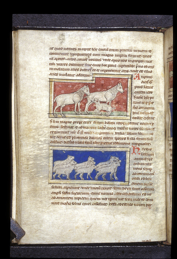 Sheep from BL Sloane 3544, f. 16v