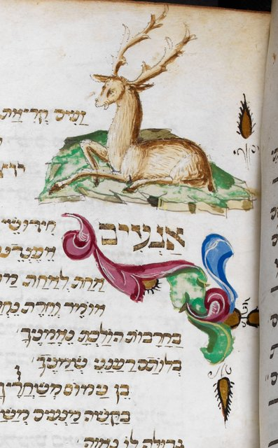 Stag from BL Add 16577, f. 61