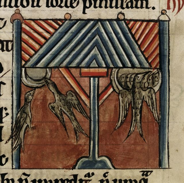 Swallows from BL Harley 4751, f. 52v
