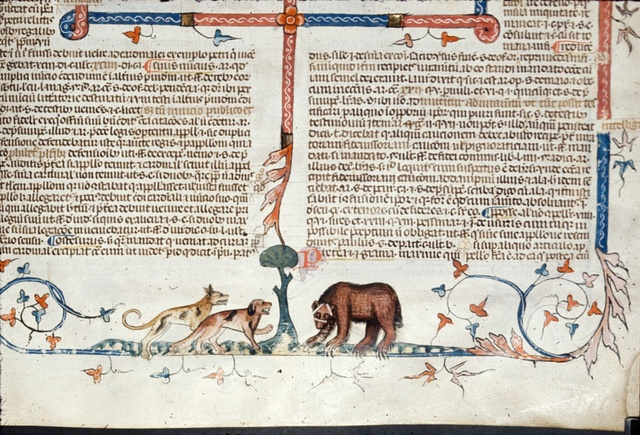 Two dogs and a bear from BL Royal 10 E IV, f. 155