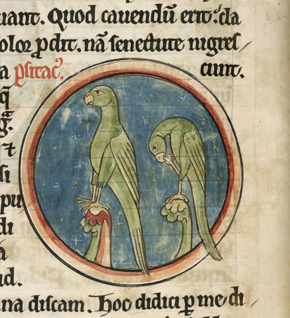 Two parrots from BL Harley 4751, f. 39v