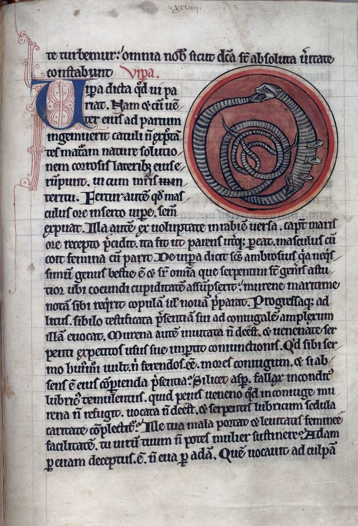 Vipers from BL Harley 4751, f. 60