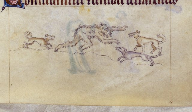 Wild man and dogs from BL Royal 2 B VII, f. 173