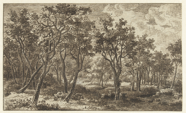 Boslandschap in het landgoed Zon, nabij Eindhoven