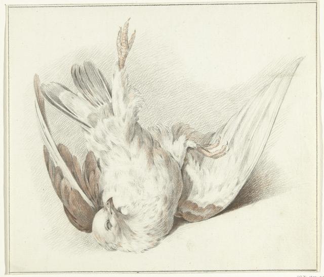 Dode duif