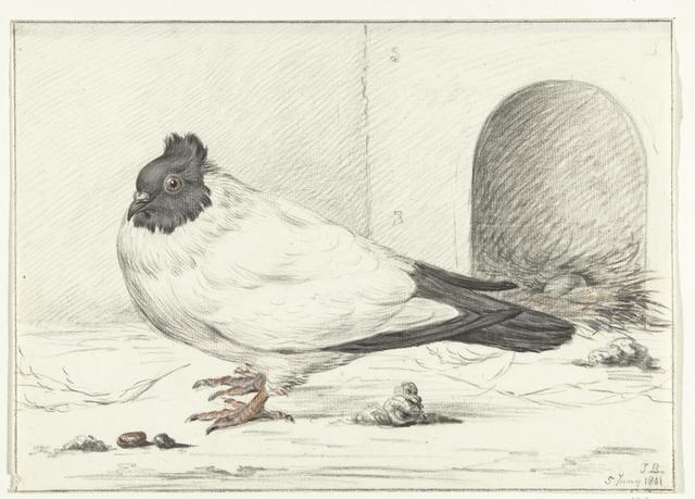 Duif en een nest met een ei