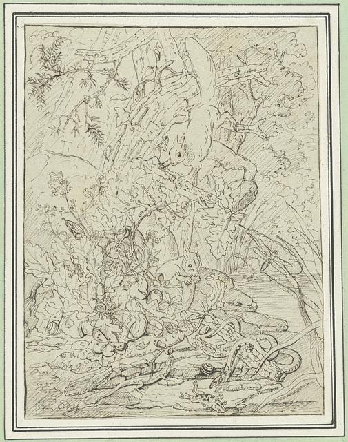 Eekhoorns, slangen en amfibieën in het struikgewas