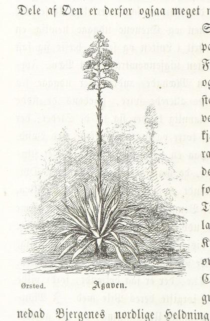 """flora from """"Den danske Stat, en almindelig geographisk Skildring for Folket. Med mange Illustrationer"""""""
