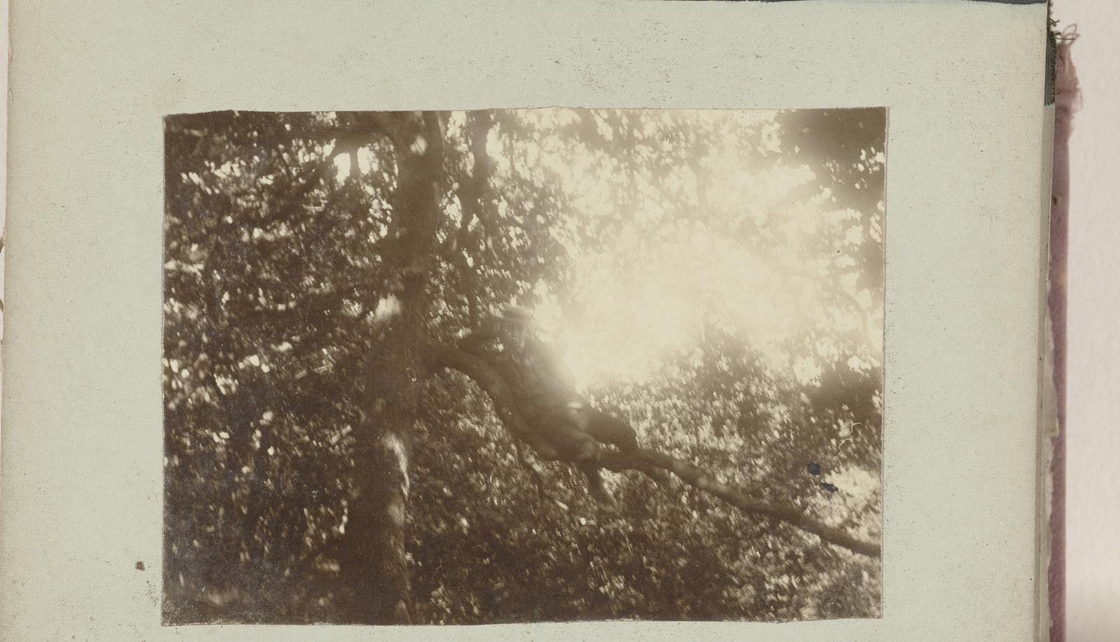 Jongen in een boom